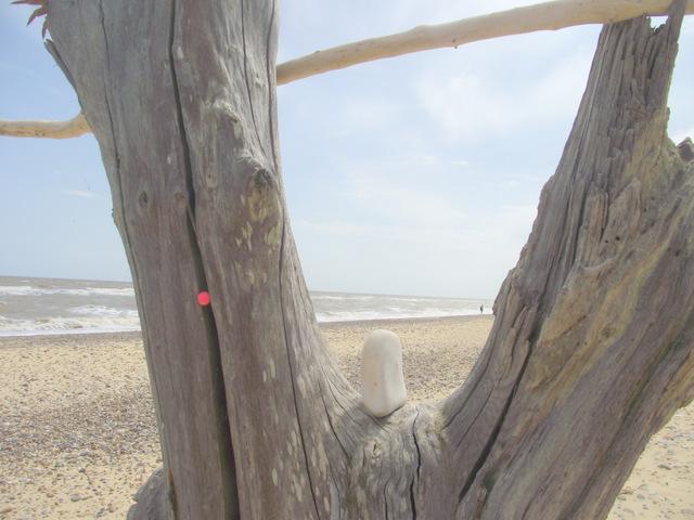 tree on beach sand & sea