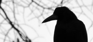The Poetry of Crows Writing Competition