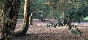 Sensing Nature Outdoor Performances in Thornham Woods