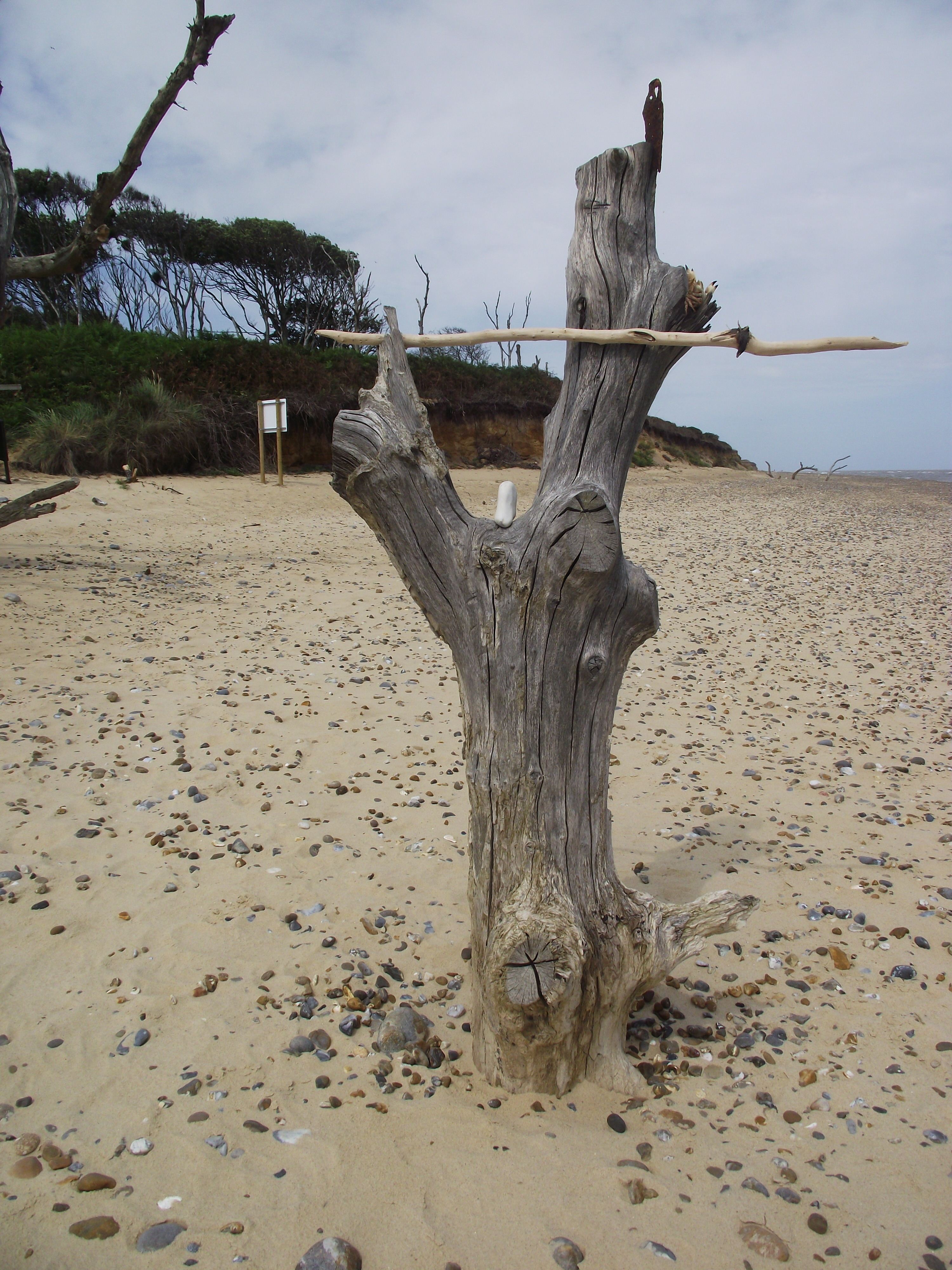 a skeleton tree on Covehithe beach marks a lunch stop for our creative beachcombing walk.