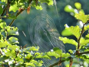 an orb spider web, metaphor for poems from the labyrinth