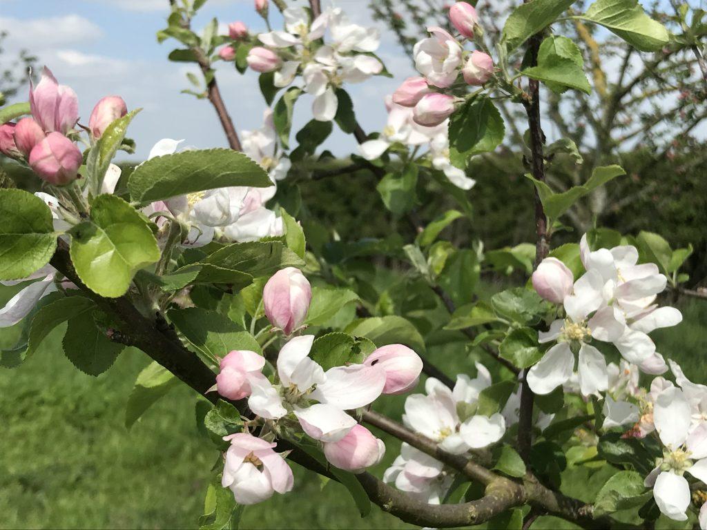 white blossom on tree