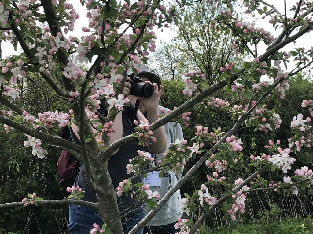 taking photos of the blossom