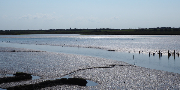 Looking towards the sun across the shimmering mud of the Blyth estuary