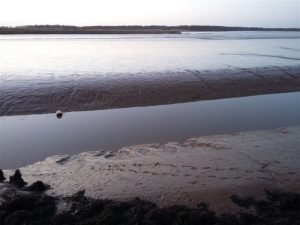 otter footprints across mudflats in the Blyth estuary