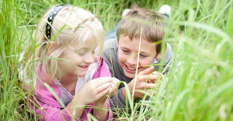 Ringsfield Meadow Day