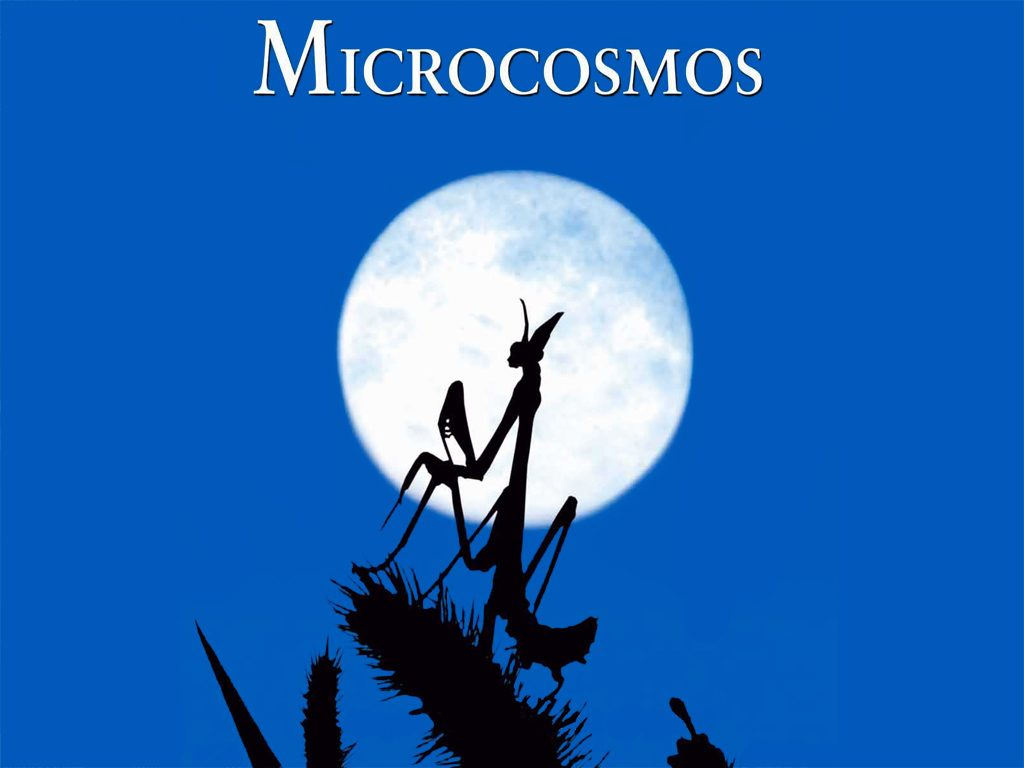 Microcosmos (1997)