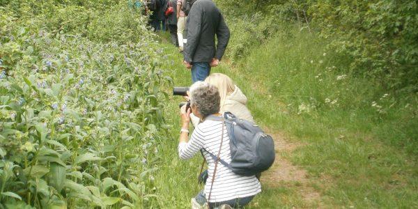 Bugs & Blossoms walk at mellis