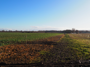 Arable field marked up ready for planting